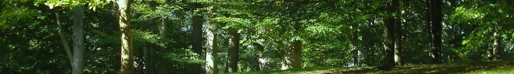 Greencity.org